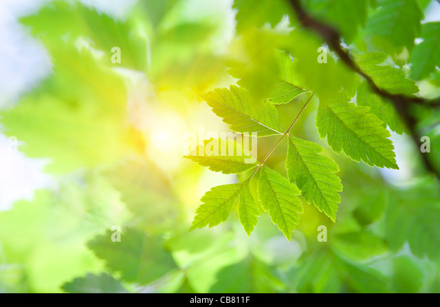 Sunlight through the Leaves - Stock-Bilder