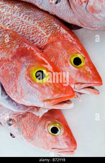 Colorful fresh red snapper fish at dock, Miami Beach, Florida. - Stock Image