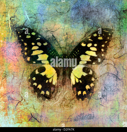 Mixed medium illustration of a butterfly. - Stock Image