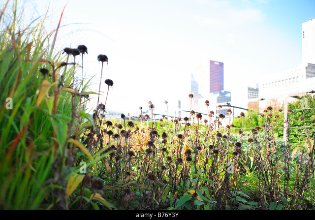 PRAIRIE STYLE LURIE GARDEN IN MILLENIUM PARK IN DOWNTOWN CHICAGO ILLLINOIS USA - Stock Image