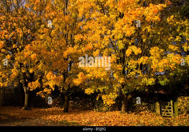 Autumn at Style, Cheshire, UK - Stock-Bilder