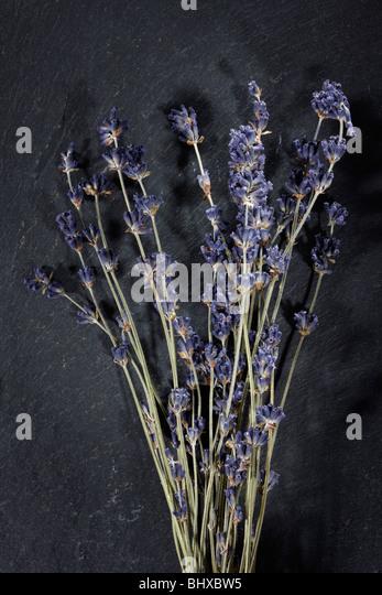 Lavender - Stock-Bilder