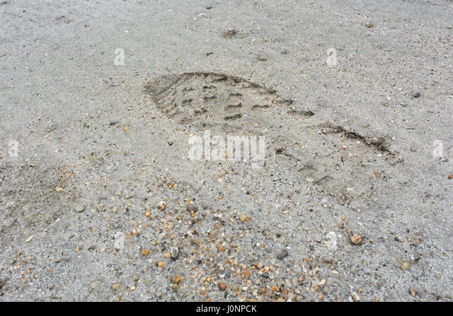 Human footprints in sandy beach (Par, Cornwall). Possible metaphor for leaving your mark or even carbon footprint. - Stock Image