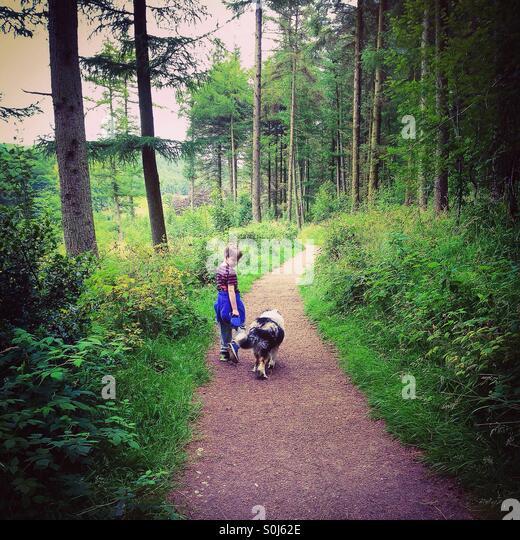 Boy and dog on woodland walk. - Stock Image