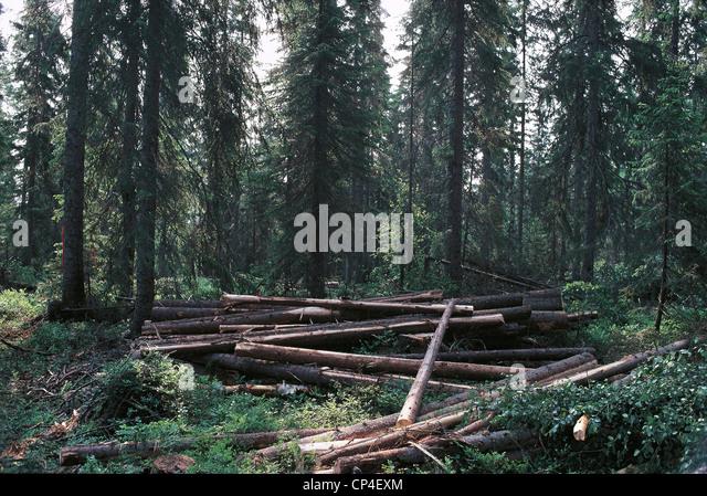 Sweden - Bollstabruck, deforestation. - Stock Image