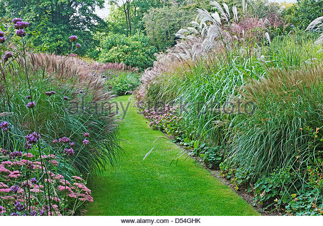 Border with grasses stock photos border with grasses for Ornamental sea grass