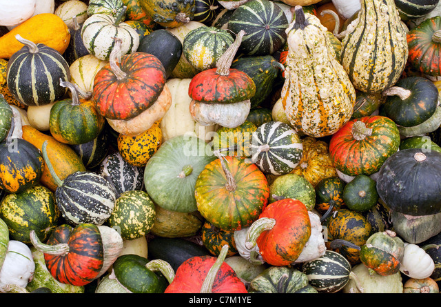 Colorful pumpkins assortment on the market - Stock Image