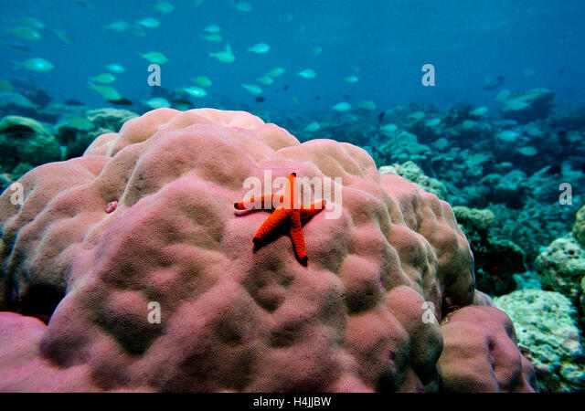 Knobbed Stock Photos Amp Knobbed Stock Images Alamy
