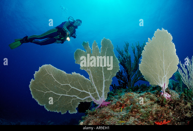 Coral reef and scuba diver Punta Cana Caribbean Sea Dominican Republic - Stock Image