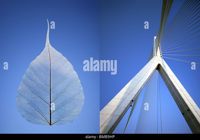 suspension bridge in North Wales juxtaposed with skeleton leaf against blue sky - Stock-Bilder