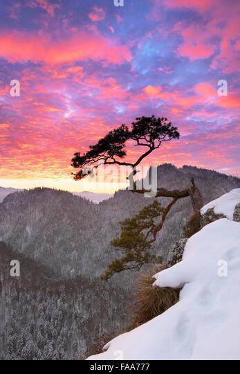 Single tree in Pieniny Mountains National Park at sunset, Poland - Stock Image