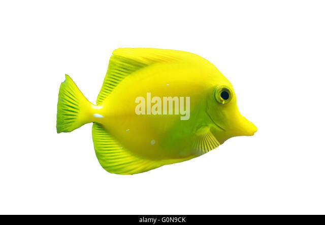 Tropical Fish Tank Pet Stock Photos Tropical Fish Tank