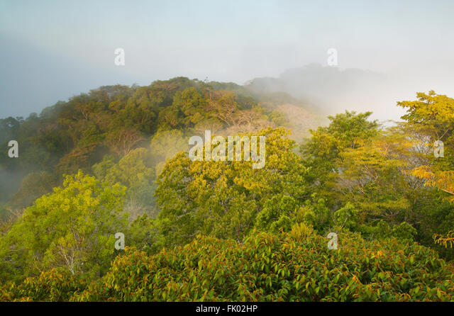 Mist at sunrise in the rain forest of Soberania national park, Republic of Panama. - Stock-Bilder