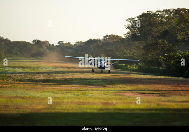 A Cessna 206 lands at the grass airstrip in Porto Jofre, North Pantanal, Brazil - Stock Image