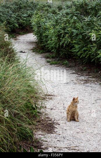 Miami Beach Florida Atlantic Ocean South Pointe Park feral cat wild - Stock Image