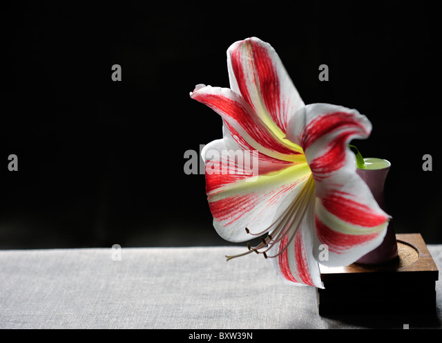 einzelne blume stock photos einzelne blume stock images alamy. Black Bedroom Furniture Sets. Home Design Ideas