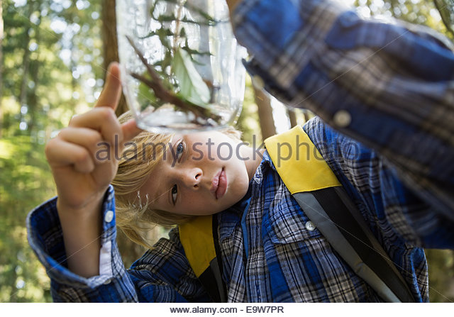 Curious boy in woods examining plants in jar - Stock-Bilder