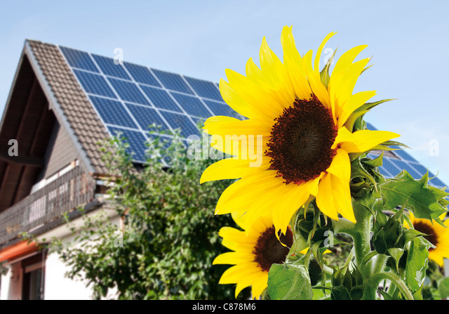 Germany, Cologne,  Sunflowers in front of house with solar panels - Stock Image