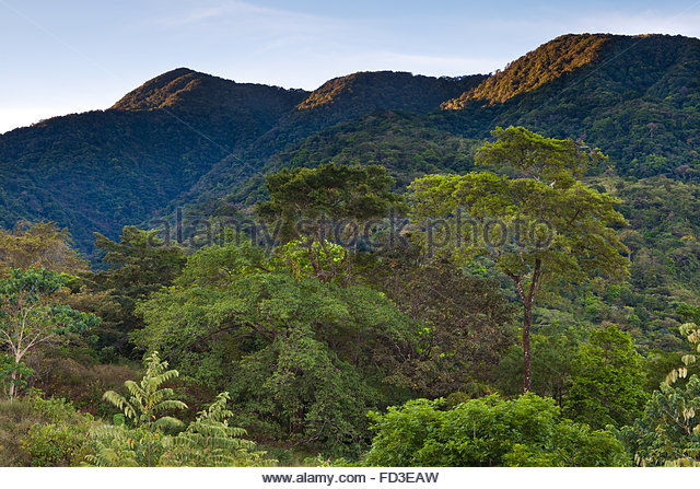 First light in Cerro Hoya national park, Veraguas province, Republic of Panama. - Stock-Bilder