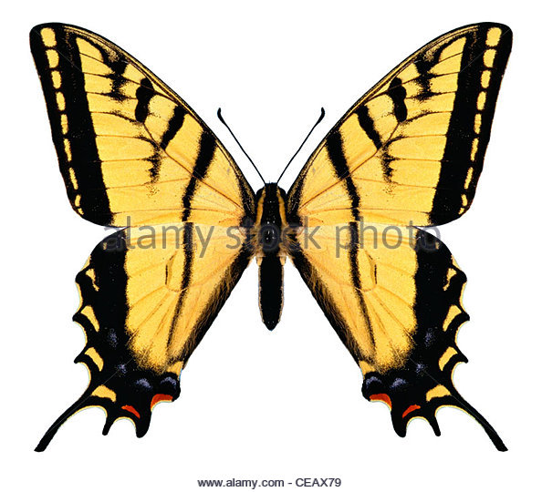 Butterfly computer image, concept, mystery - Stock-Bilder