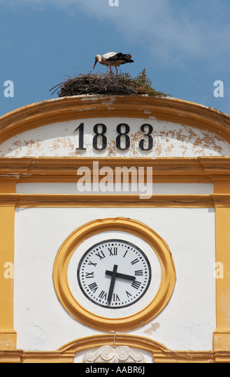 White stork ( Ciconia Ciguena) nesting on clock tower Extremadura, Spain, España, Europe, Europa, - Stock Image