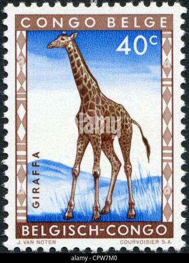 BELGIAN CONGO - CIRCA 1959: Postage stamps printed in the Belgian Congo, shows a giraffe, circa 1959 - Stock-Bilder