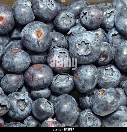 Blueberry - Stock Image