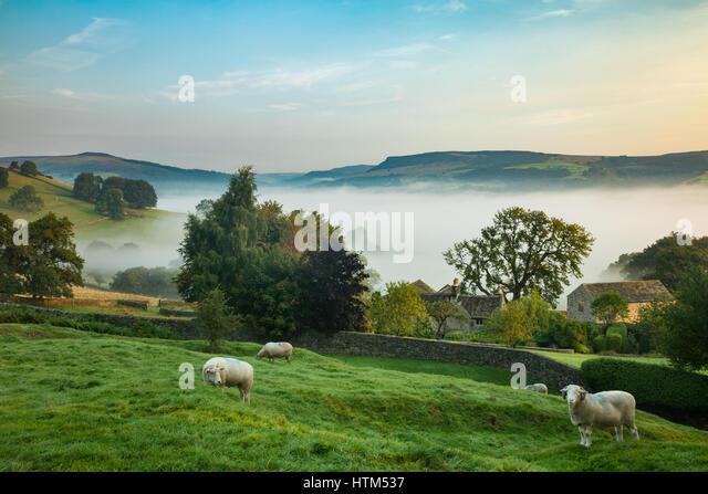 Sheep grazing near Offerton Hall above the mist in the Derwent Valley below, Derbyshire Peaks District, England, - Stock-Bilder