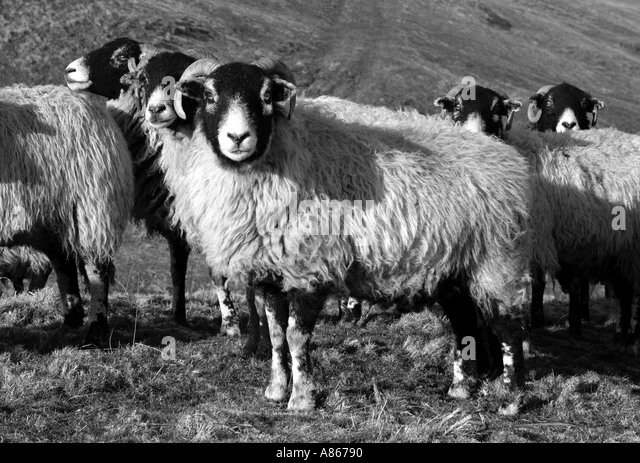 swaledale girls Richmond is a market town the prosperity of the medieval town and centre of the swaledale wool industry greatly increased in the late for boys and girls aged.