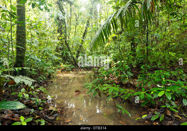 Tropical Monsoon Forest Stock Photos Tropical Monsoon