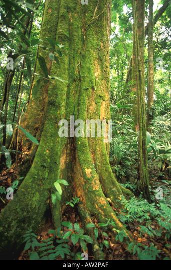 Costa Rica rain forest in Tortuguero area - Stock Image