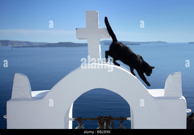 Domestic Cat (Felis silvestris, Felis catus). Black cat on the bell tower of the church in Oia - Stock Image