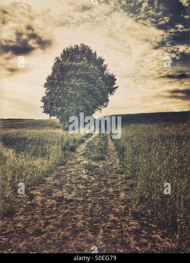 Lone tree in the field - Stock-Bilder