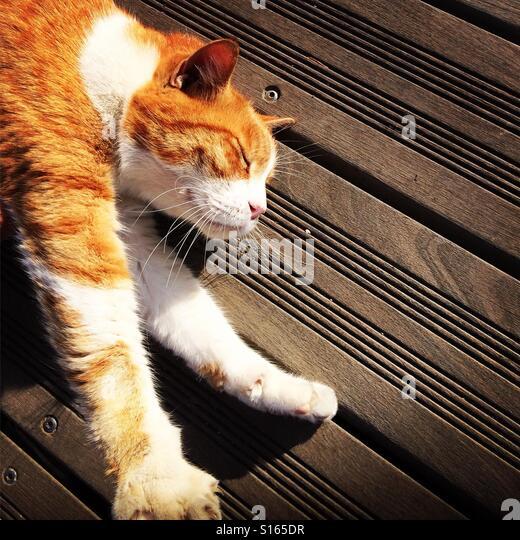 Cat relaxing - Stock-Bilder