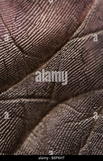 Blackened palm of hand, extreme close-up - Stock-Bilder