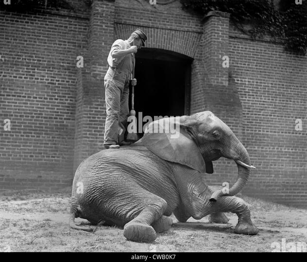 An elephant trainer, and Jumebina the elephant, 1922. - Stock-Bilder