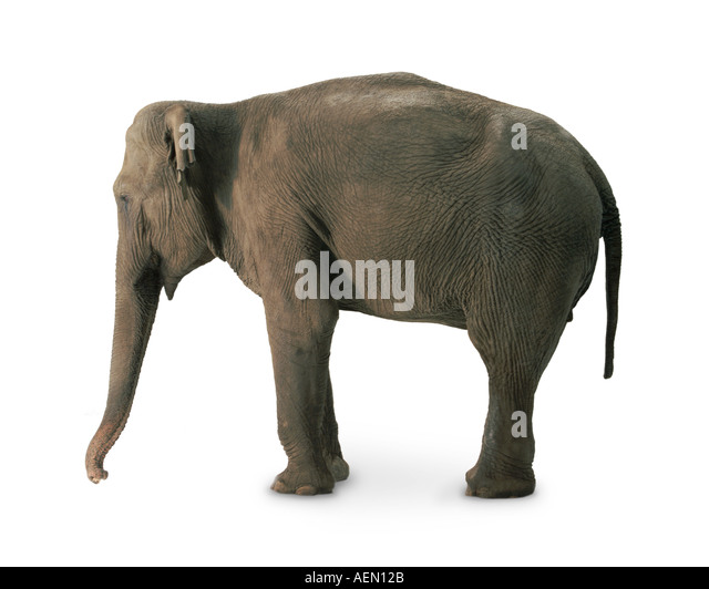 Elephant - Stock-Bilder