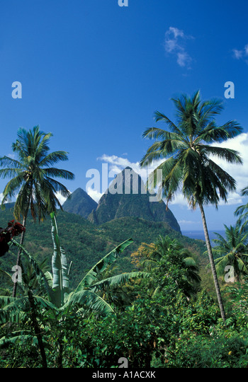 St Lucia Soufriere town overlook two pitons framed by palm trees - Stock Image