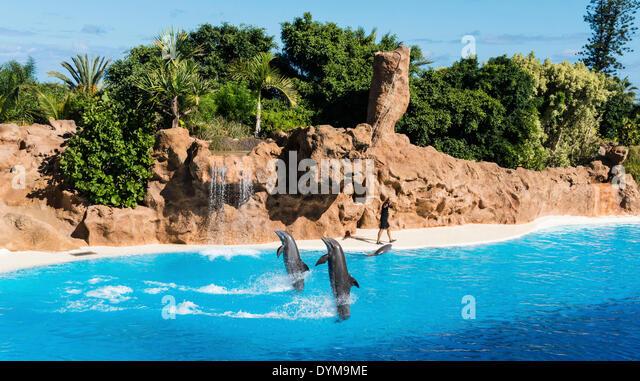 Dolphin Show, Loro Parque zoo, Puerto de la Cruz, Santa Cruz de Tenerife, Tenerife, Canary Islands, Spain - Stock Image