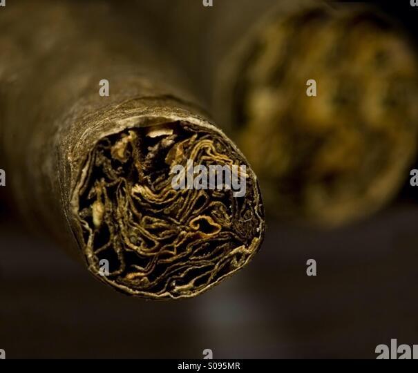 Dry brown cigar - Stock Image