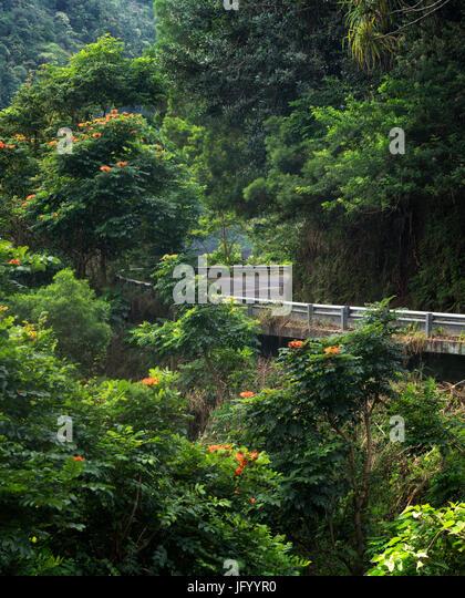 Road to Hana. Maui, Hawaii - Stock Image