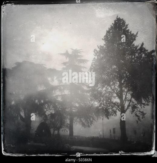 Trees in the fog in winter - Stock-Bilder