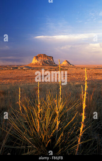 Yucca plants and Pawnee Buttes, Pawnee National Grassland, Colorado USA - Stock Image