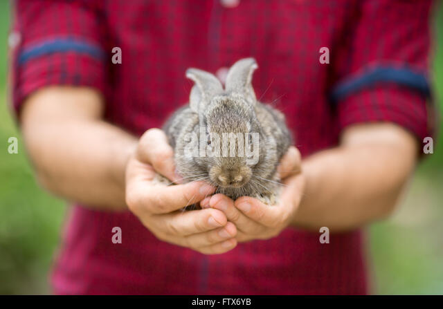 Rabbit. Animals and people - Stock Image