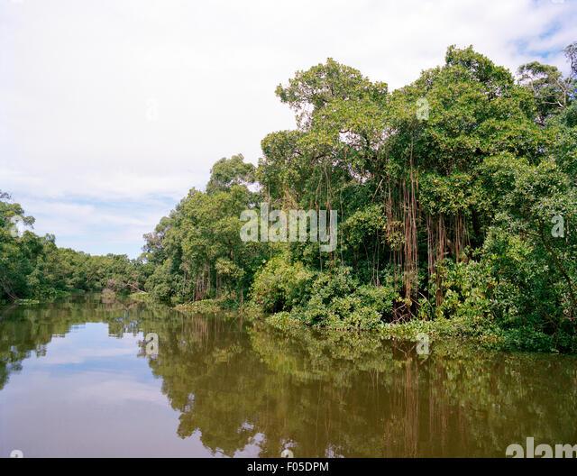 Jungle on the river banks of the Rio Preguiças. Lençóis Maranhenses, Brazil. - Stock Image