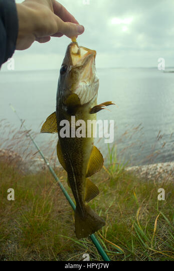 Angling Fishery Stock Photos & Angling Fishery Stock ...