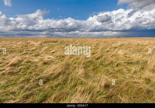 Cumulus clouds over meadows - Stock Image