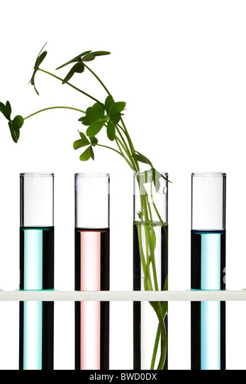 Flowers and plants in test tubes - Stock Image