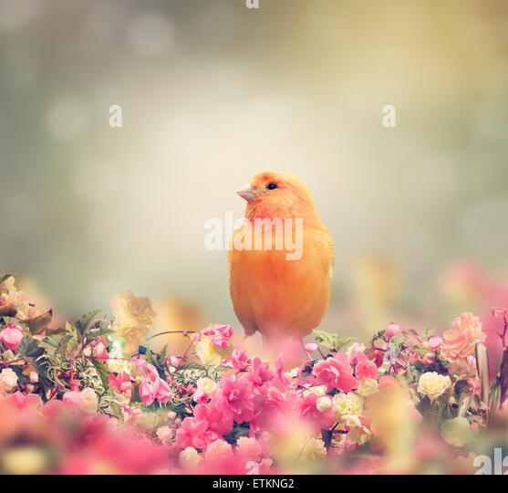 Yellow Bird Perches In Flower Garden - Stock Image