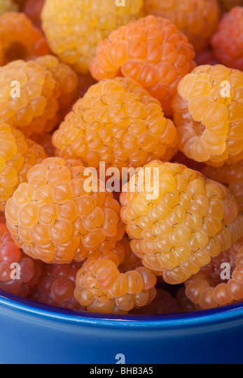 Close-up of freshly picked golden raspberries, Alaska - Stock Image